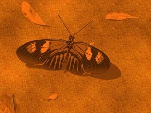 Vector Drawing of a Butterfly